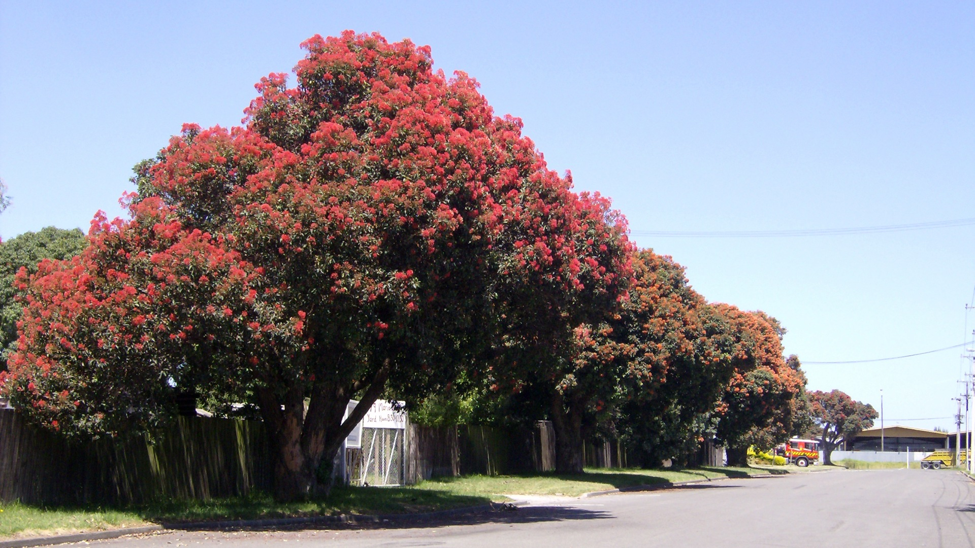 the pohutukawa tree Pohutukawa tree stock photos and illustrations search and download from millions of high resolution stock photos, royalty free images, clipart, and illustrations.
